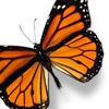 Butterfly 2 jpg
