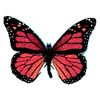Butterfly jpg