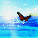 Butterfly on the ocean
