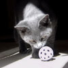 Cat and a Ball