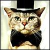 Groom cat