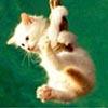 Hanging kitten