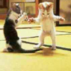 Karate Kitties