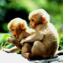 Lil Monkeys