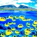 Paradise Fish 2