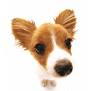 Puppy 4