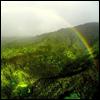 Rainforest & a rainbow