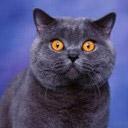 cat avatar 0057