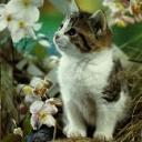 cat avatar 0161