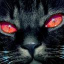 cat avatar 0392