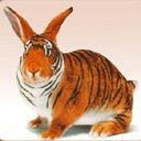 exotic animal avatar 0055