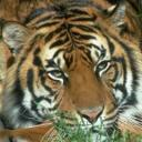 exotic animal avatar 0353