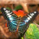 exotic animal avatar 0528