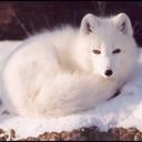 exotic animal avatar 2334