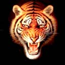 tigers lions avatars 0402