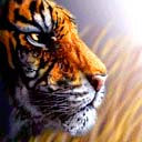 tigers lions avatars 0418